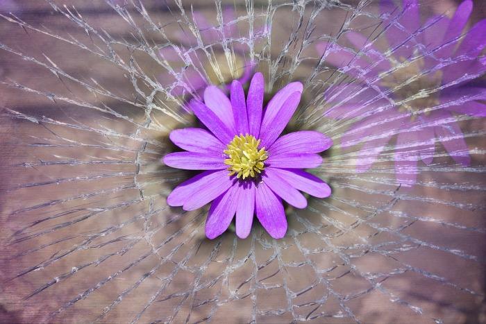 balkan-anemone-756762_1280 (1)